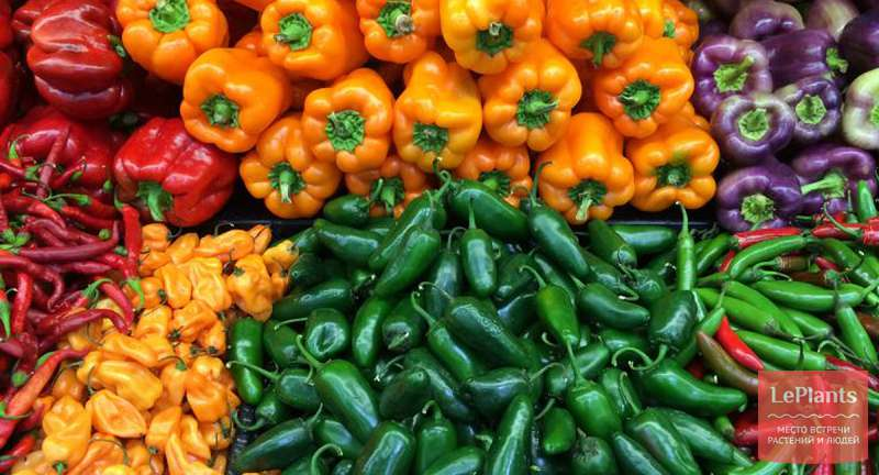 Лучшие сорта перцев на 2020 год: самые вкусные и урожайные
