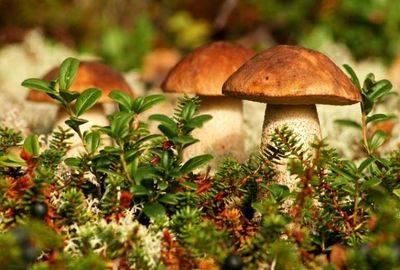 Микориза – симбиоз гриба и растения