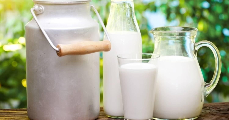 Овечье молоко: польза и вред, что из него делают?