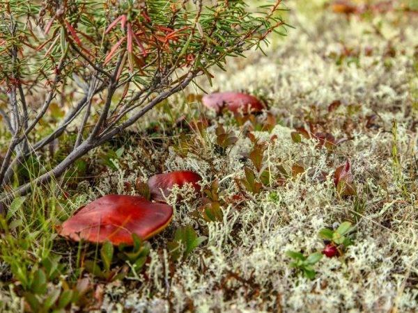 Виды мхов: список названий мхов россии, какие растения к ним относятся