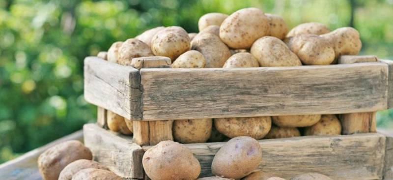 Как и где лучше всего хранить картошку