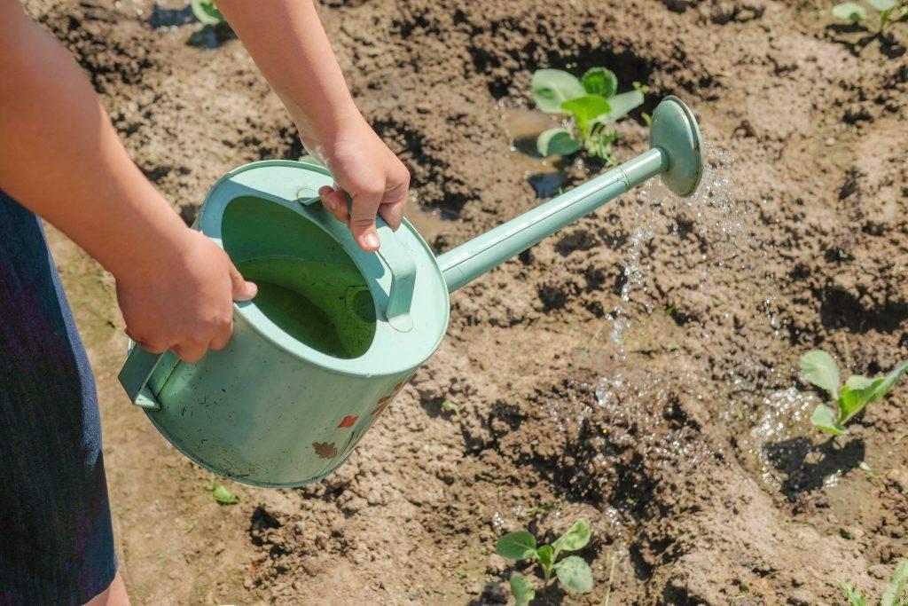 Как и чем поливать цветы