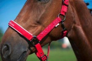 Пошаговый мастер-класс по изготовлению недоуздка для лошади своими руками
