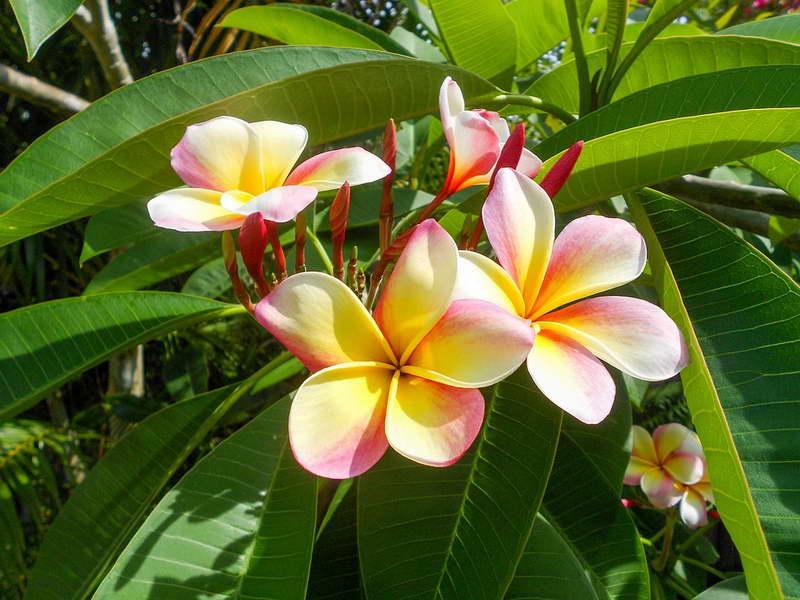 10 самых ароматных цветов :: инфониак