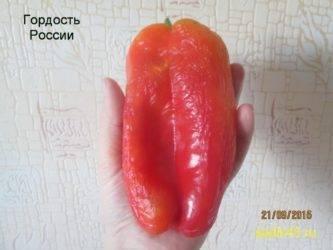 Перец гордость россии: описание, фото, отзывы