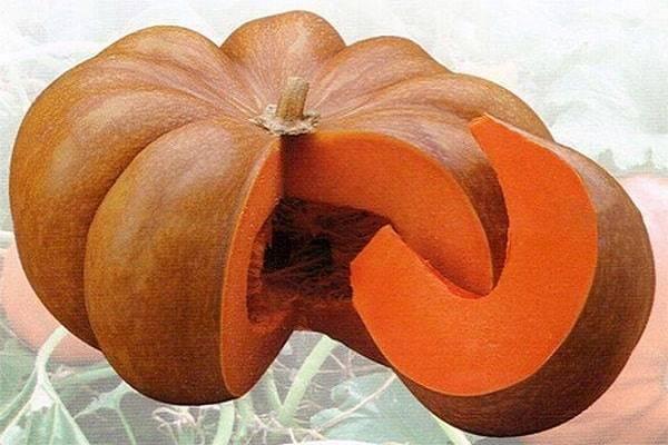 Мускатная тыква: описание и полезные свойства, особенности посадки и выращивания + 15 лучших сортов с фото