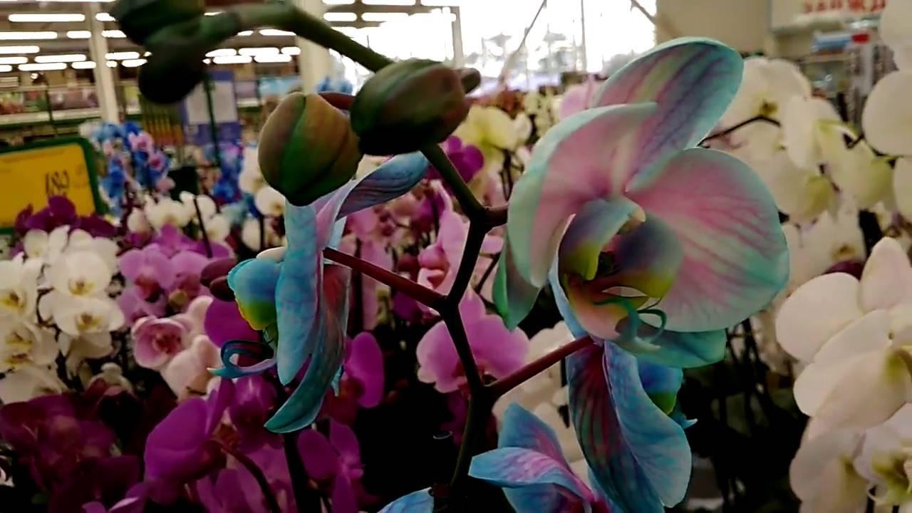 Необычные и редкие виды орхидей