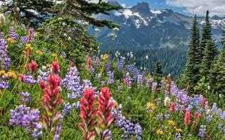 Лучшие медоносные травы: классификация растений и продуктивность