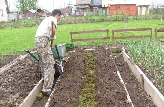 Подготовка грядки для огурцов в открытом грунте