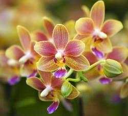 Все о грунте для орхидей