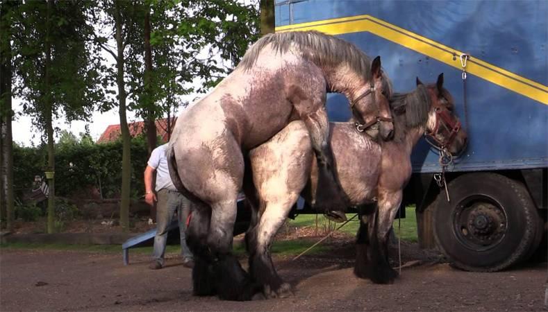 Размножение лошадей – как происходит процесс спаривания и беременность 2021