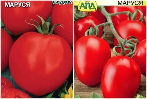 Томат «маруся» — описание сорта: характеристика урожайности и агротехника посадки, ухода и выращивания помидора (фото)