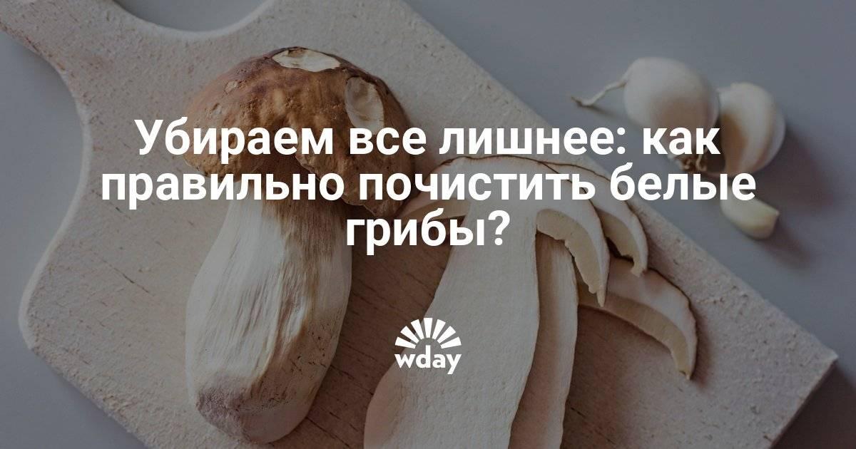 Нужно ли чистить белые грибы - лучший огород