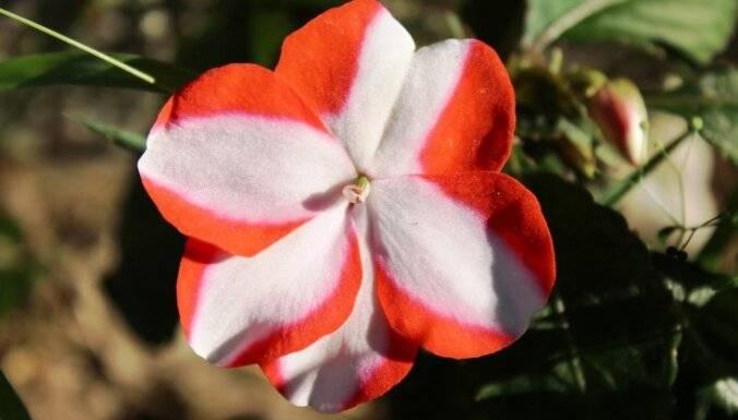 Неприхотливые комнатные цветы на круглый год: разновидности растений и правила ухода