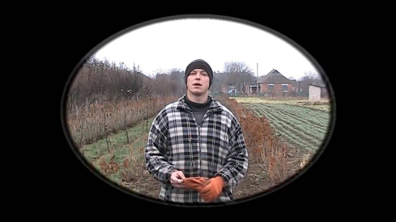 Выращивание чеснока как бизнес: выгода и организация