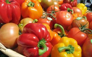 Подкормка рассады томатов: чем подкормить в домашних условиях