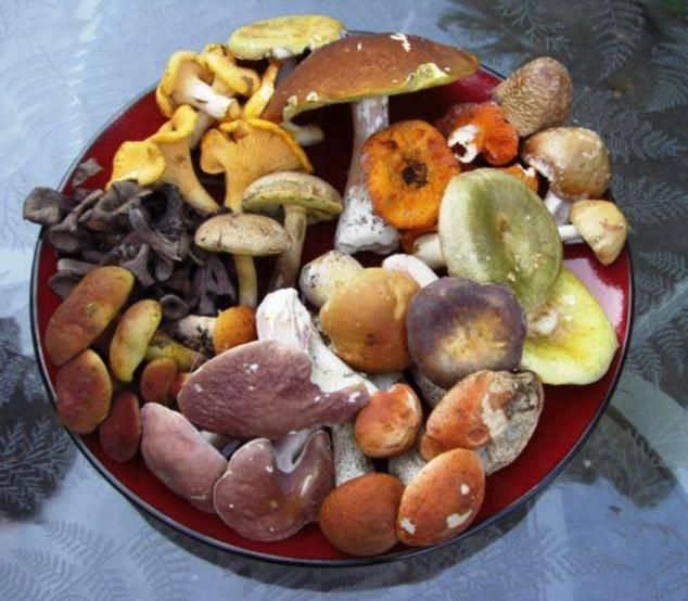 Сыроежка зеленая – съедобный гриб, фото сыроежки