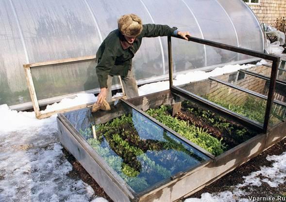 Как выращивать помидоры в теплице зимой и летом > видео + фото выращивания круглый год