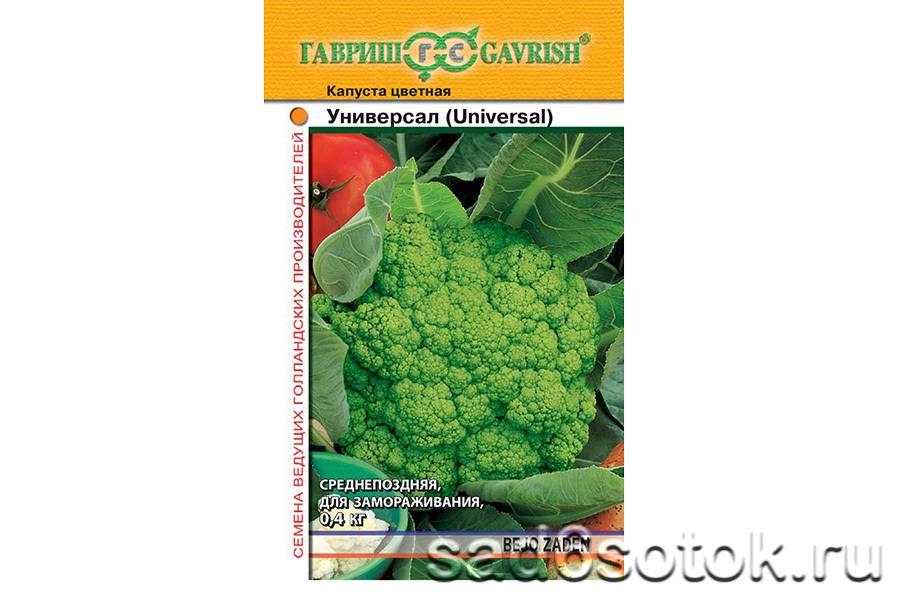 Выращивание цветной капусты в сибири, уход в открытом грунте, лучшие сорта