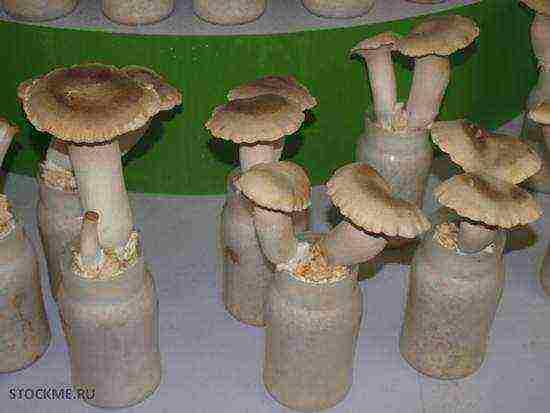 Самые дорогие грибы в мире: названия и фото — selok.info