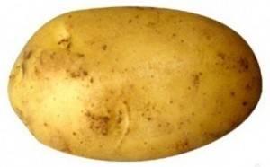✅ свитанок киевский: описание сорта картофеля, характеристики, агротехника - tehnomir32.ru
