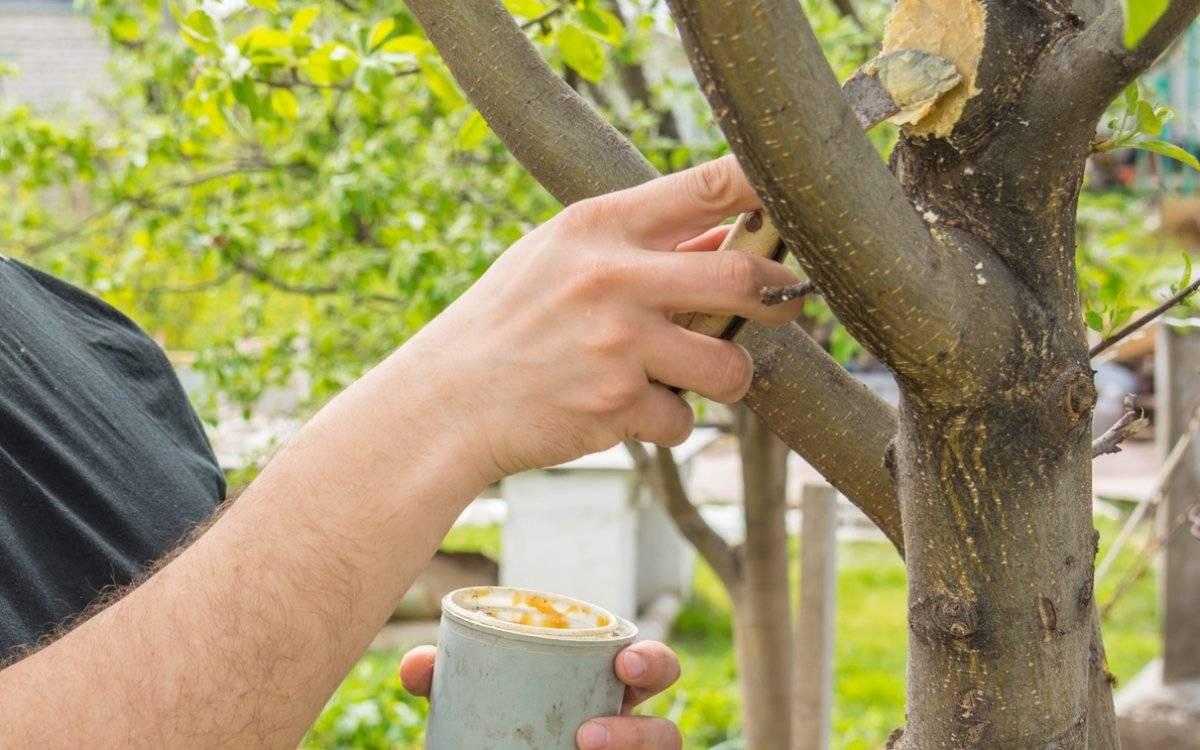 Садовый вар - описание и применение в садоводстве