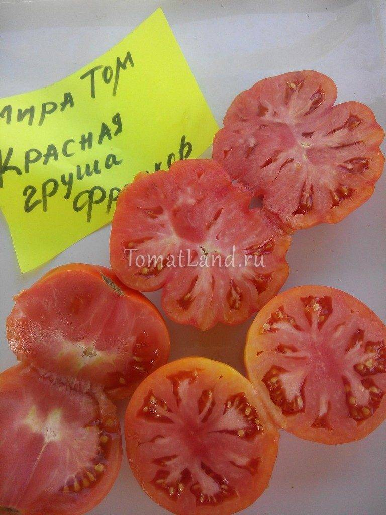 Описание и характеристики сорта томата груша красная