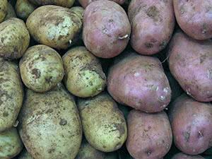 Проволочник в картошке как избавиться (12 эффективных средств)