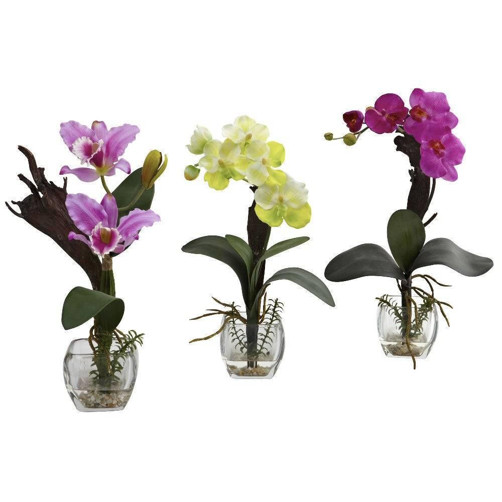 Как часто нужно пересаживать орхидею и можно ли отсрочить этот момент?