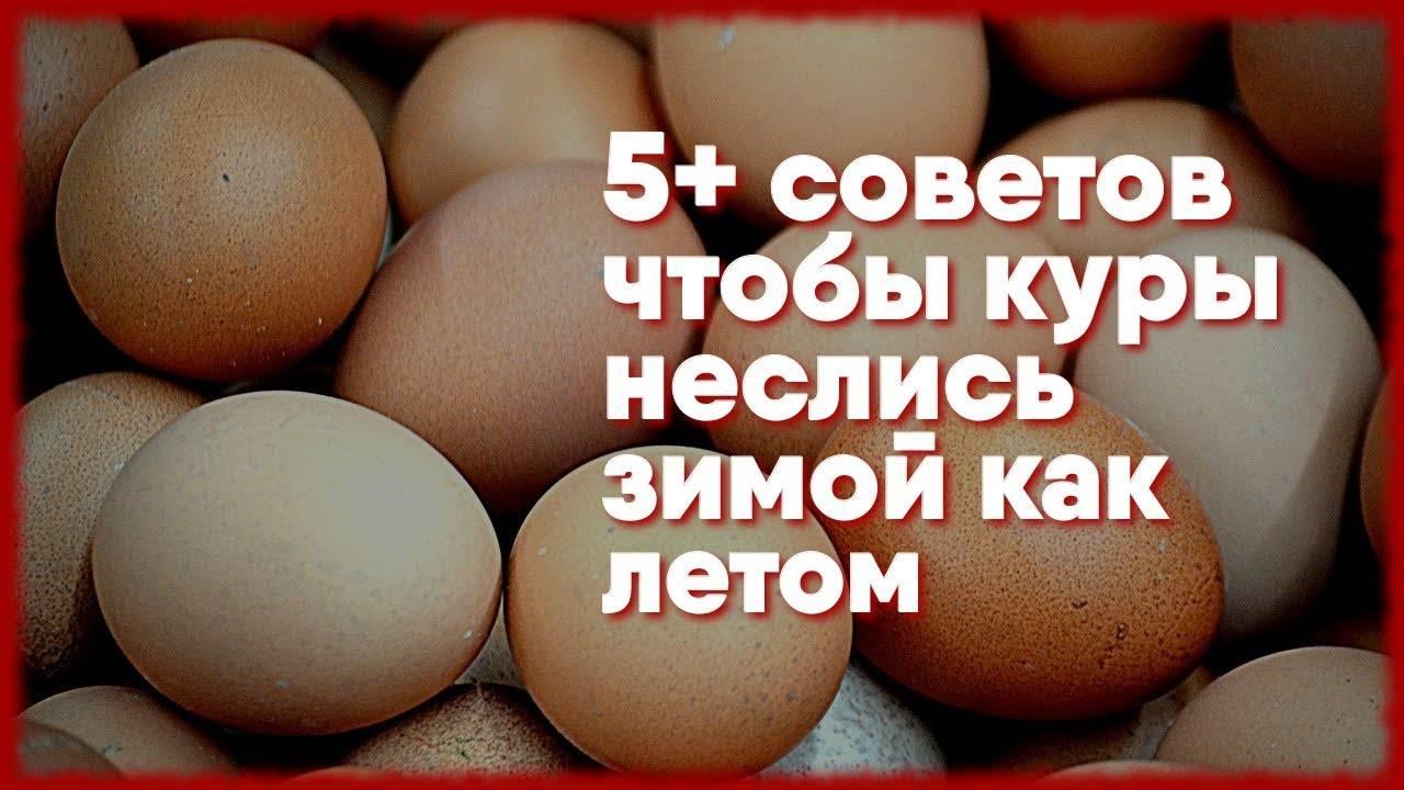 Чем кормить кур, чтобы лучше неслись, увеличить яйценоскость