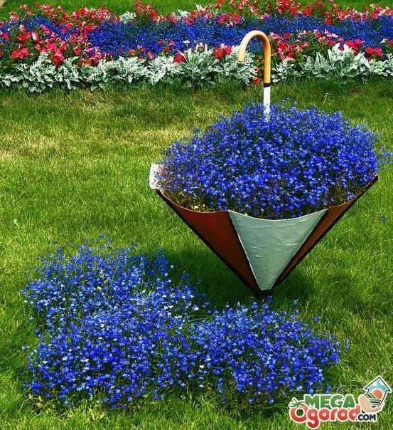 Лобелия - посадка, выращивание из семян, уход, размножение