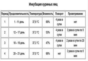Какая должна быть температура хранения инкубационных яиц?
