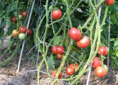 Как обрабатывать растения фармайодом: инструкция по применению и отзывы