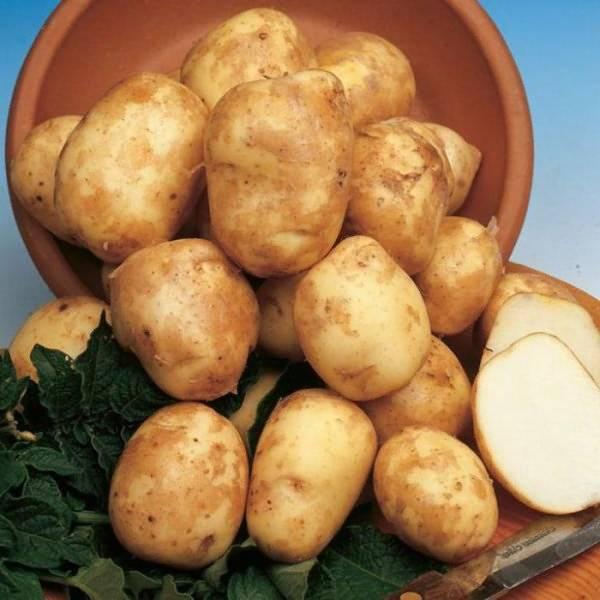 Картофель киви химия или нет: описание, характеристика сорта, отзывы