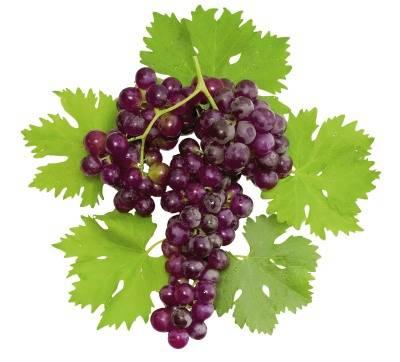 Польза винограда: 110 фото и особенности его применения в рационе питания