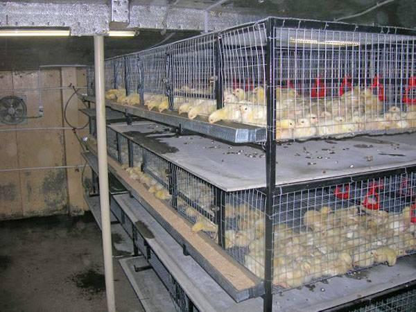 Птичники для бройлеров