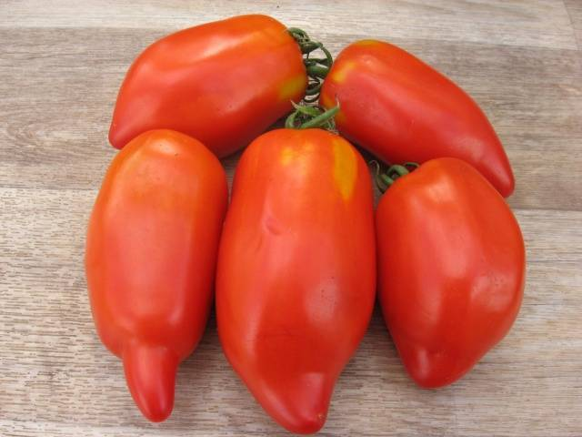 Томат перцевидный полосатый: отзывы, фото, урожайность | tomatland.ru