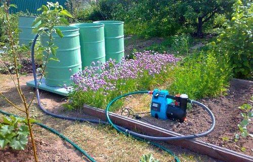 Как поливать огурцы? режим и способы полива оурцов при выращивании в тепличных условиях и на открытом грунте