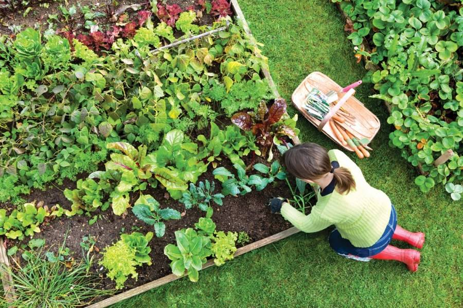 Планировка сада и огорода на участке: советы профессионала