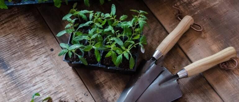 Сроки посадки помидоров на рассаду в сибири в 2021 году: благоприятные дни