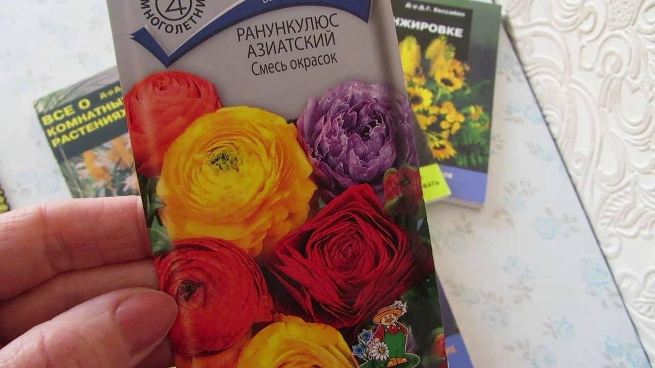 Ранункулюс - 76 фото садового цветка и методов его выращивания
