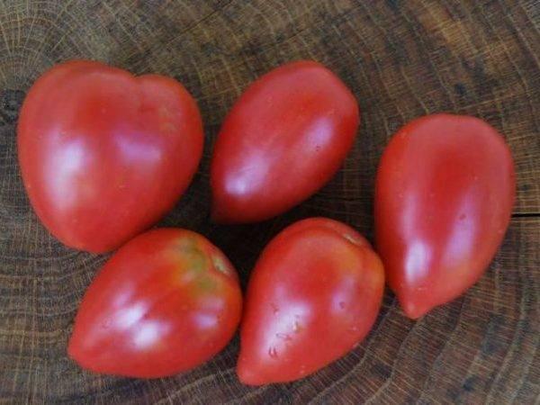Описание сорта томата розовое чудо, особенности выращивания и ухода