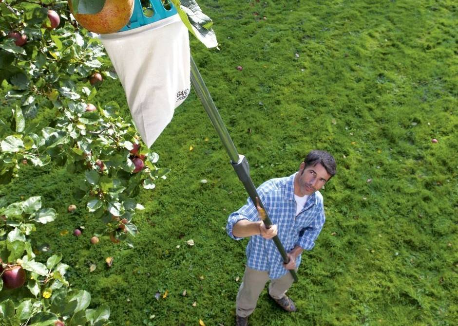 Бизнес на яблоках - бизнес-план выращивания яблок