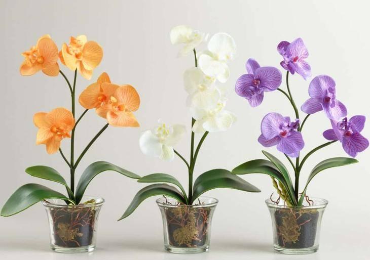 Рекомендации по частоте полива орхидеи дома в разное время года