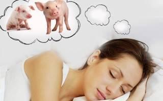 К чему снится свинья: толкование сна по различным сонникам