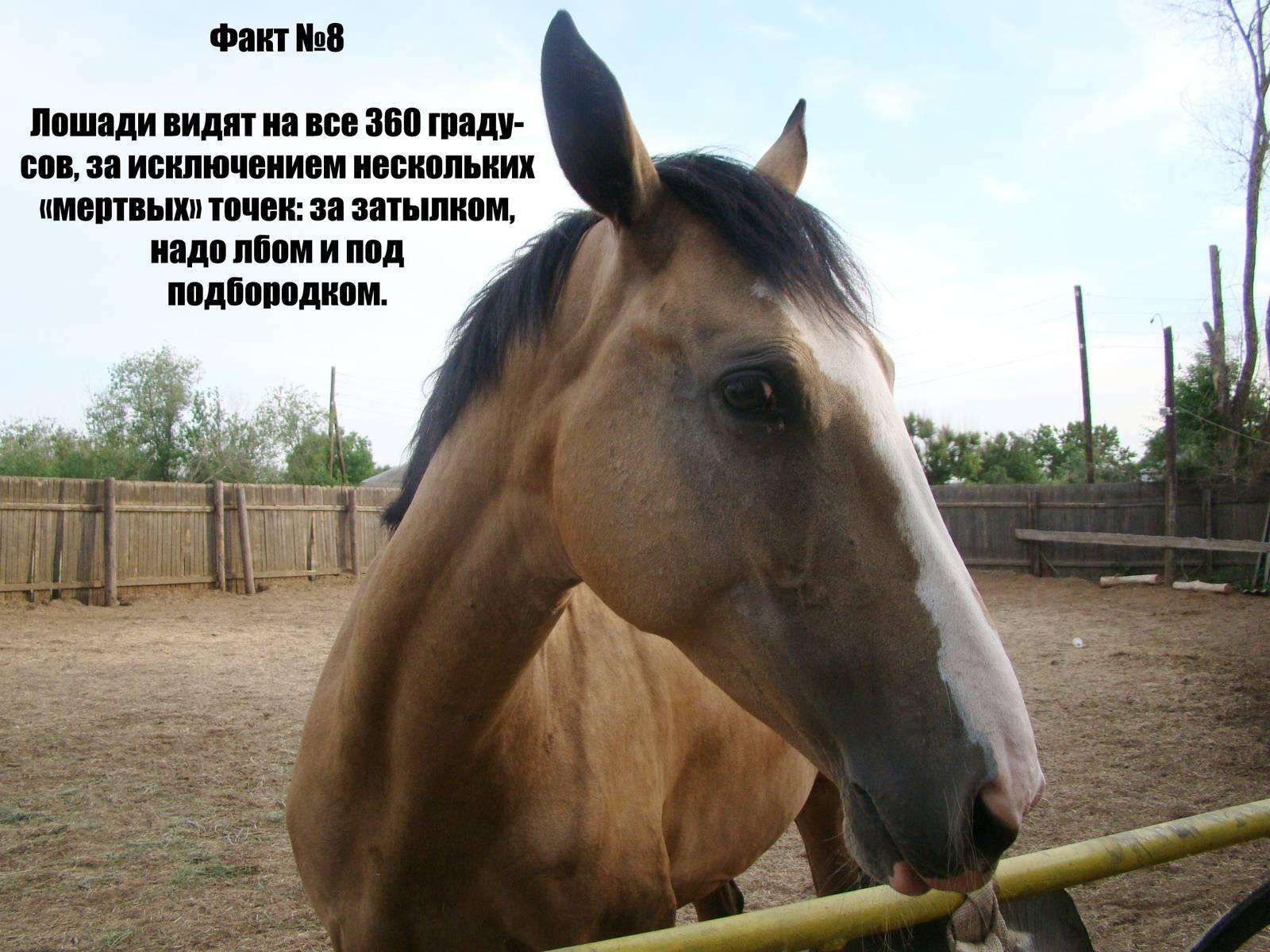 Интересное из мира лошадей: что мы о них знаем?