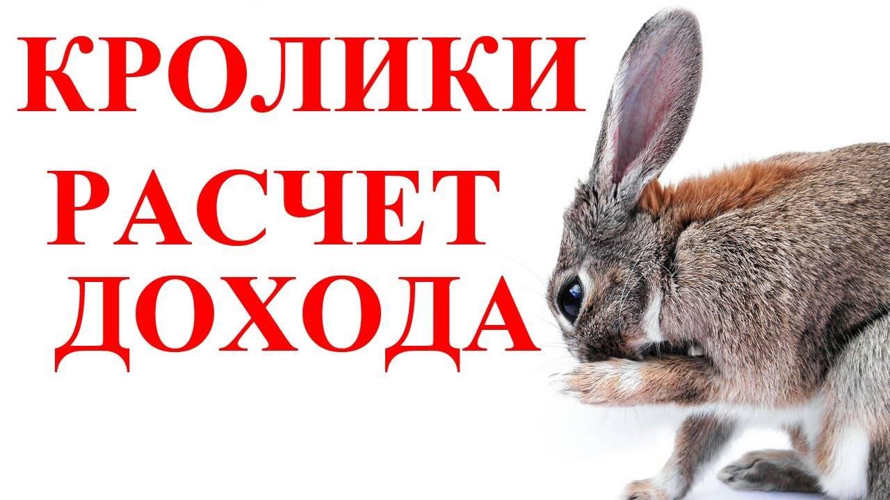Эффективное разведение кроликов как бизнес   cельхозпортал