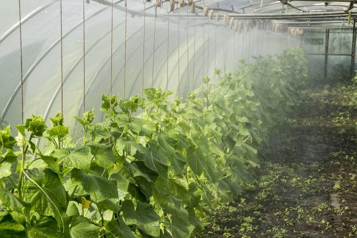 Как вырастить огурцы в теплице октябрина ганичкина