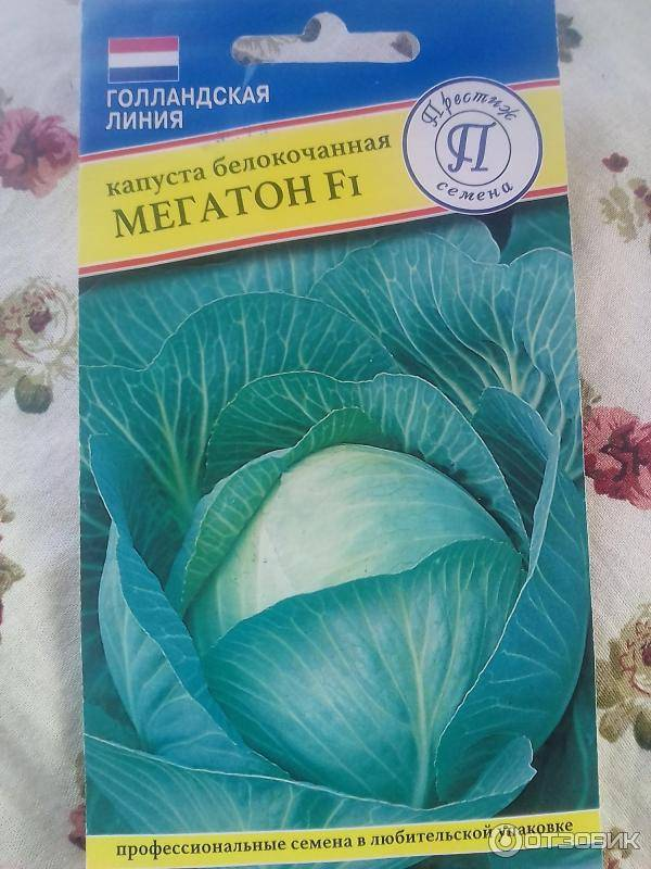 Устойчивый среднеспелый гибрид капусты центурион f1