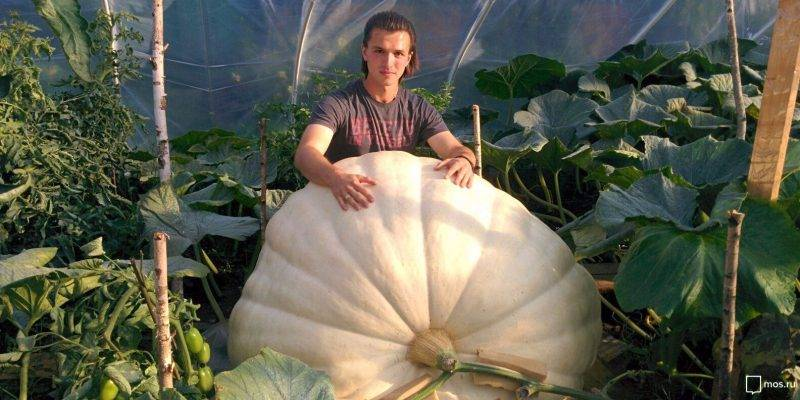 Какая тыква признана самой большой в мире